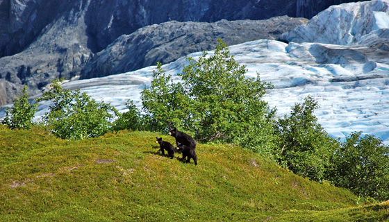 Alaska Walking & Hiking Tour